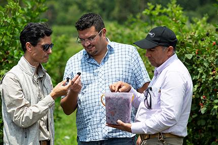 John Tentomas (middle) at a berry farm